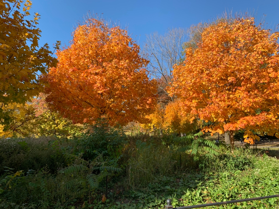 The Election, Fall Colors & The Pandemic in New YorkCity